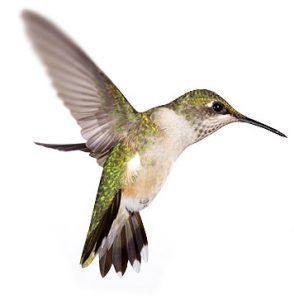 Ptičja perspektiva - fotografiranje in izdelava video materiala iz višine